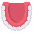 artificial teeth, dental care, dentist, denture, health, jaw top view, tooth