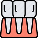 incisor, teeth, anatomy, dental, health icon