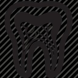 anatomy, care, dental, dentistry, enamel, teeth, tooth icon