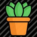 plant, plant pot, nature, green, leaf, flower, garden