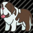 bernard, friendly, giant, family, pet