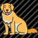 golden, retriever, friendly, smart, pet
