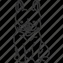 french, bulldog, tiny, breed, playful
