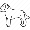 labrador, retriever, friendly, domestic, pet