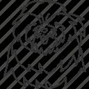 shihtzu, pet, furry, hair, brachycephalic