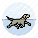 d, dog, swimming icon