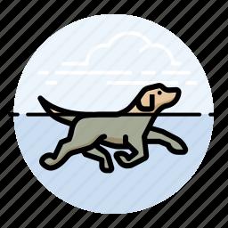 d, dog, swimming icon