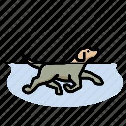 dog, dogs, labr, swim icon