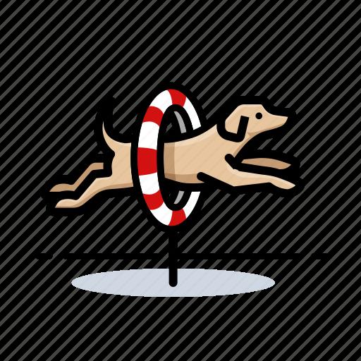 dogs, labrador retriever, pet icon
