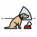 bone, cone, dog, dogs, in icon