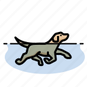 dogs, pet, puppy, dog, retriever, dog swimming icon