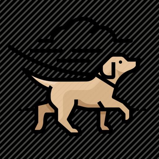 canine, dog, dogs, labrador, r icon