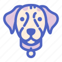 animal, canine, dog, dogs, face, labrador, pet