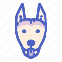 animal, canine, doberman, dog, dogs, face, pet