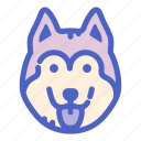 canine, pet, dog, husky, dogs, face, animal
