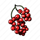currant, gooseberry, red, fruit, food, retro, vintage
