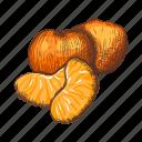 citrus, mandarin, orange, tree, tangerine, retro, vintage