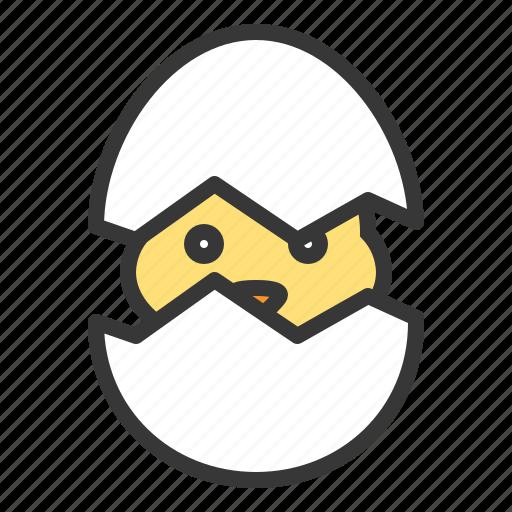 birth, celebration, chicken, easter, egg, holiday icon