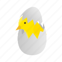 bird, chick, chicken, egg, isometric, yellow, young icon