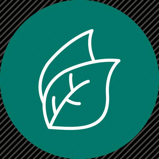 eco, leaf, leaves, nature icon