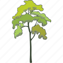 forest, garden, plant, tree icon