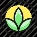organic, plant