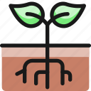 organic, plant, root