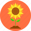 eco, ecology, environment, leaves, nature, plant, sun flower icon