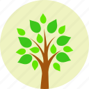 tree, eco, ecology, environment, leaves, nature, plant