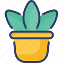 care, ecology, flower, gardening, growing, plant, pot