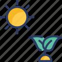 eco, garden, grass, growth, leaves, plant, sun