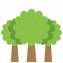 ecology, environment, tree, plant, forest