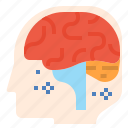 brain, education, learning, neurology, neurotransmitter, think icon