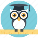 graduate owl, owl education, owl teacher, wisdom, wise owl icon