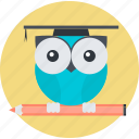 owl, knowledge, solution, education, round, smart