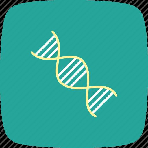 biology, chain, dna, genetics, molecule, organization, structure icon
