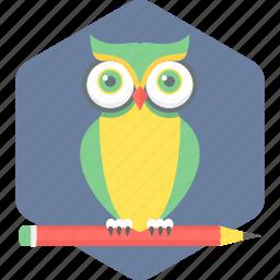 owl, owl teacher, teacher icon