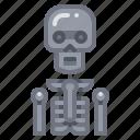 anatomy, bone, skeleton