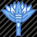 blossom, flower, garden, lotus icon