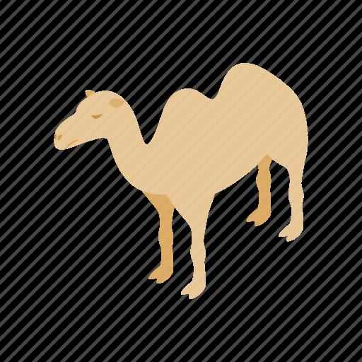 africa, animal, camel, desert, egypt, isometric, travel icon