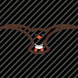 beach, bird, seagull icon