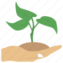 cultivation, development, growing, growing plant, growth icon