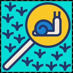 explore, glass, nature, search, snail icon