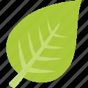 leaf, green