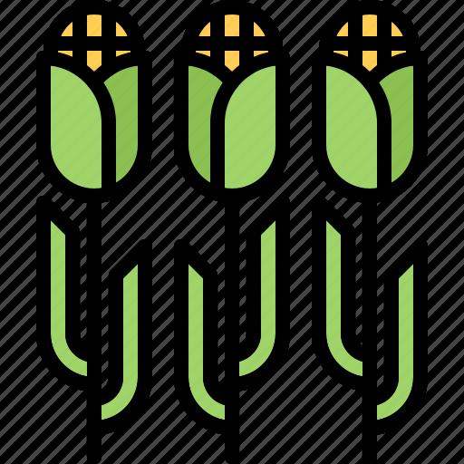 corn, farm, farmer, field, garden, gardener icon