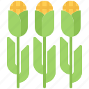 corn, farm, farmer, field, garden, gardener icon