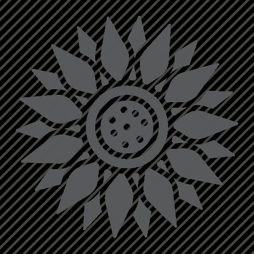agriculture, bright, farming, flower, oil, plant, sun icon