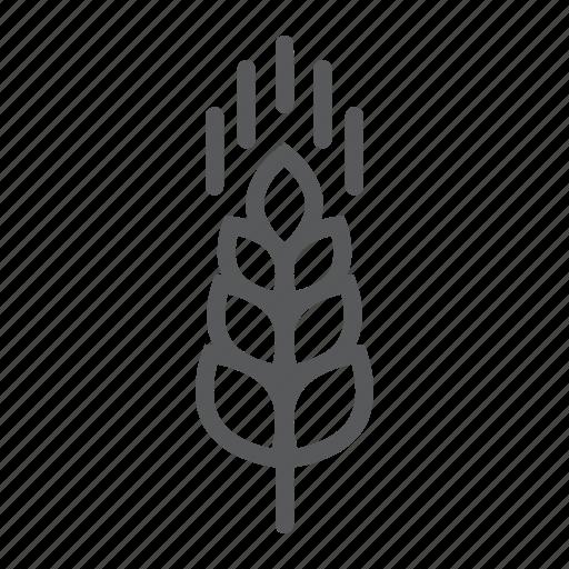 agriculture, ear, farming, food, grain, rye, wheat icon