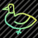 animal, animals, bird, duck, food icon