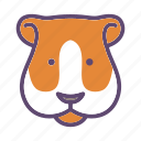 animal, cavy, farm, guinea pig, head icon